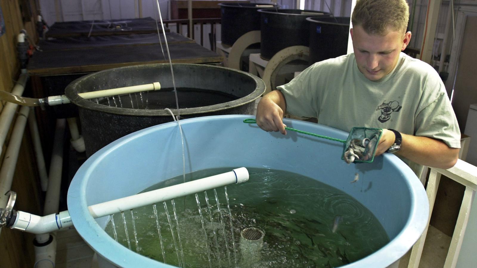 aquaculture u0026 aquaponics supplies for backyard fish farming