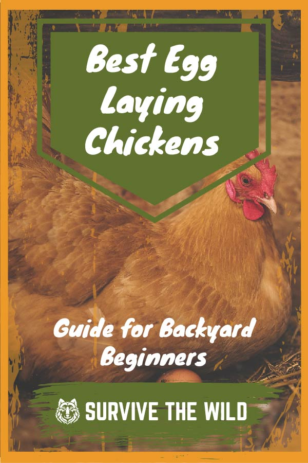 Best Egg Laying Chickens - 2019 Guide for Backyard ...